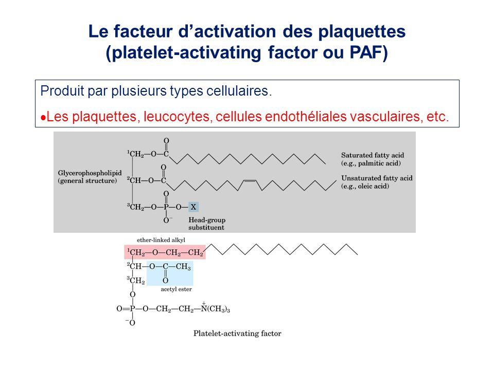 Produit par plusieurs types cellulaires. Les plaquettes, leucocytes, cellules endothéliales vasculaires, etc. Le facteur dactivation des plaquettes (p