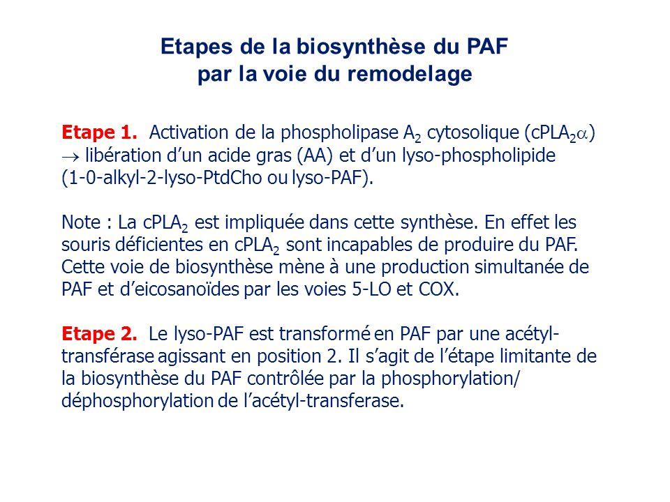 Etape 1. Activation de la phospholipase A 2 cytosolique (cPLA 2 ) libération dun acide gras (AA) et dun lyso-phospholipide (1-0-alkyl-2-lyso-PtdCho ou
