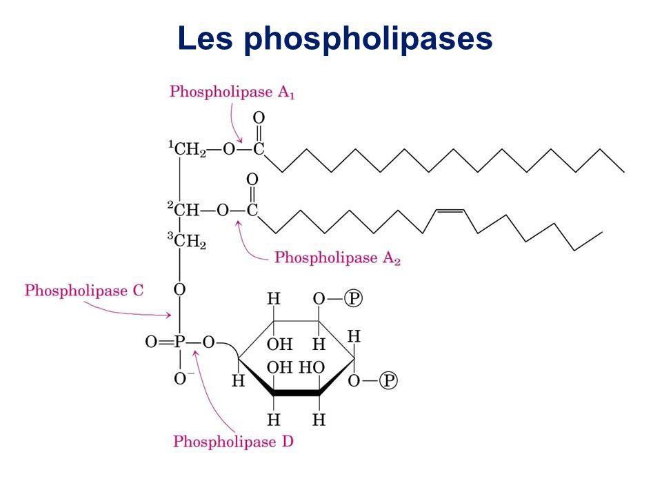 Inhibiteurs de FLAP.Inhibiteurs de 5-LO (Zileuton).