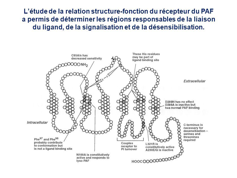 Létude de la relation structure-fonction du récepteur du PAF a permis de déterminer les régions responsables de la liaison du ligand, de la signalisat