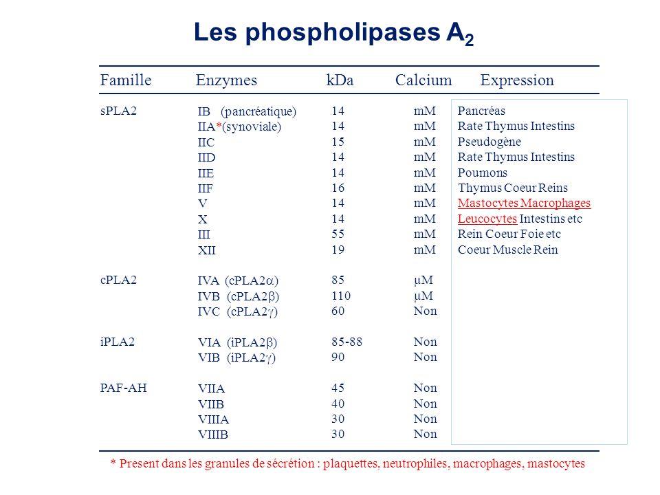 Stimuli de la synthèse des leucotriènes Peptides formylés Fragment du complément C 5 a Platelet-activating factor Lipopolysaccharides Particules opsonisées Complexes immuns AA et LTB 4 IL-8