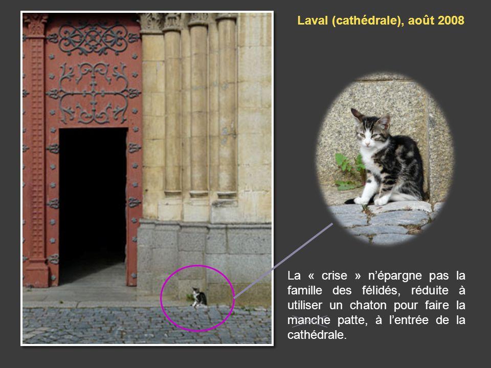 La « crise » népargne pas la famille des félidés, réduite à utiliser un chaton pour faire la manche patte, à lentrée de la cathédrale.