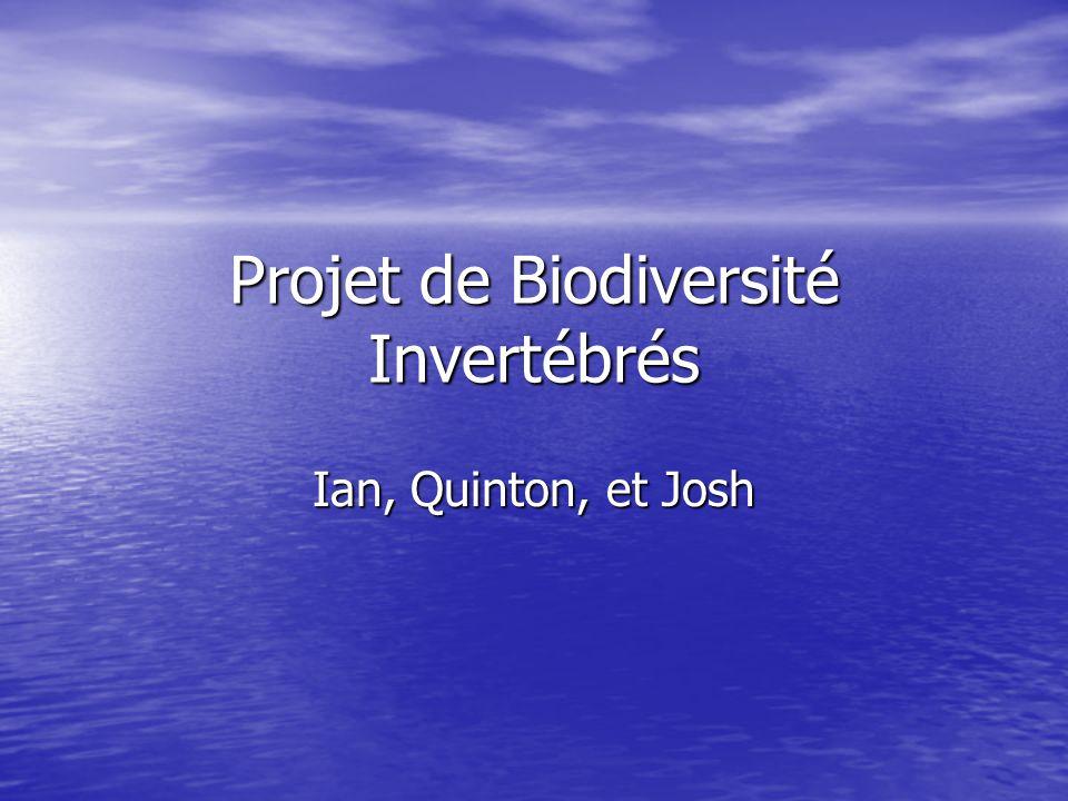 Projet de Biodiversité Invertébrés Ian, Quinton, et Josh
