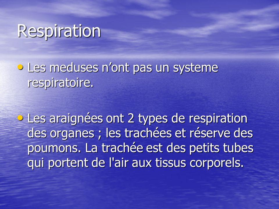 Respiration Les meduses nont pas un systeme respiratoire. Les meduses nont pas un systeme respiratoire. Les araignées ont 2 types de respiration des o