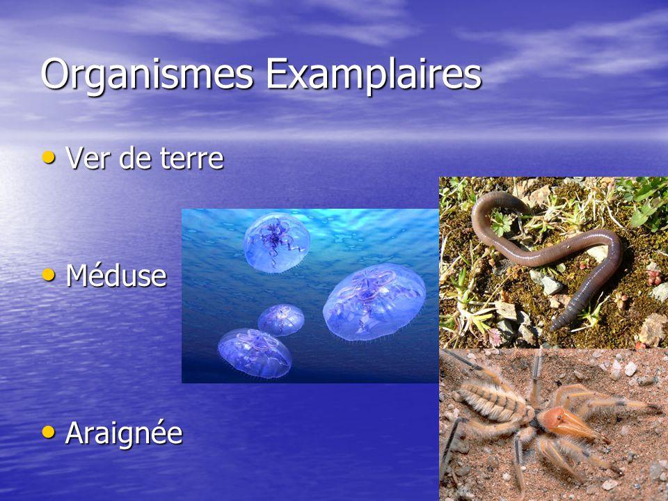Organismes Examplaires Ver de terre Ver de terre Méduse Méduse Araignée Araignée