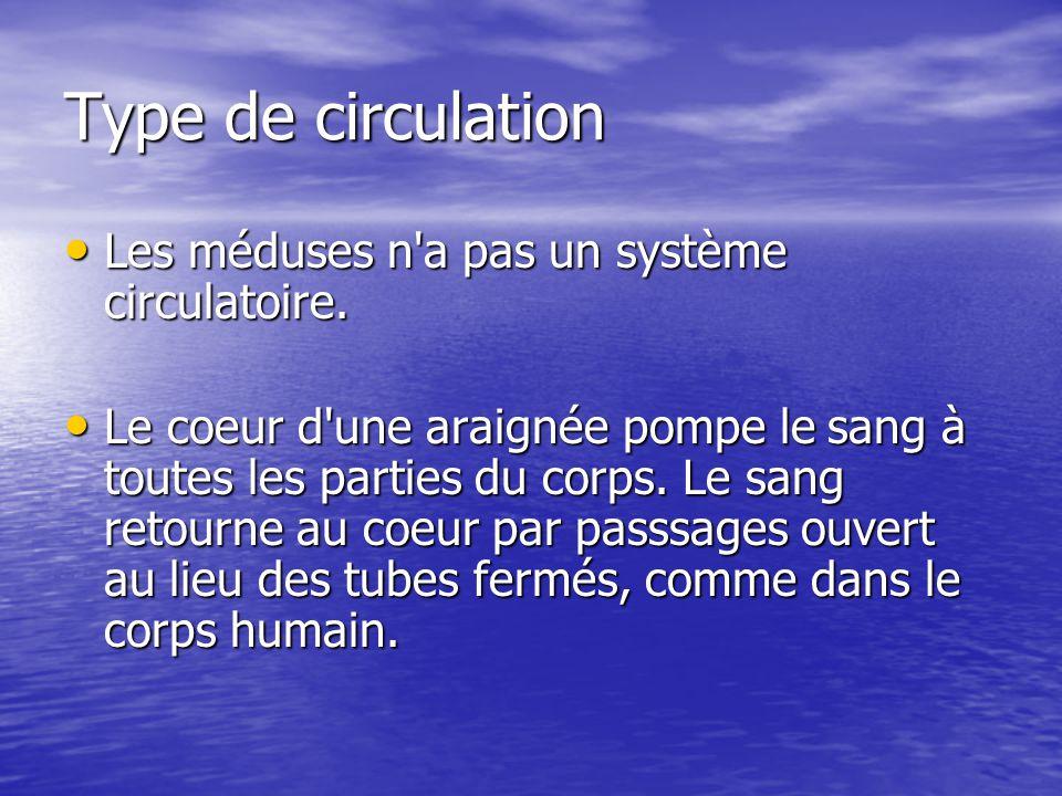 Type de circulation Les méduses n'a pas un système circulatoire. Les méduses n'a pas un système circulatoire. Le coeur d'une araignée pompe le sang à