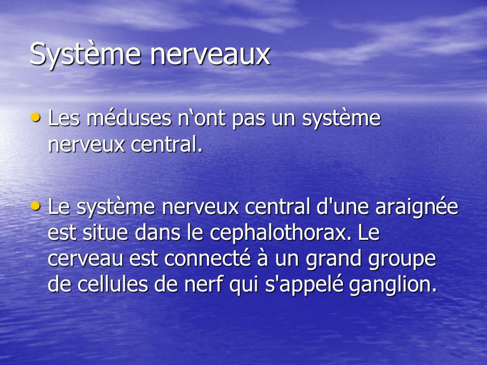 Système nerveaux Les méduses nont pas un système nerveux central. Les méduses nont pas un système nerveux central. Le système nerveux central d'une ar