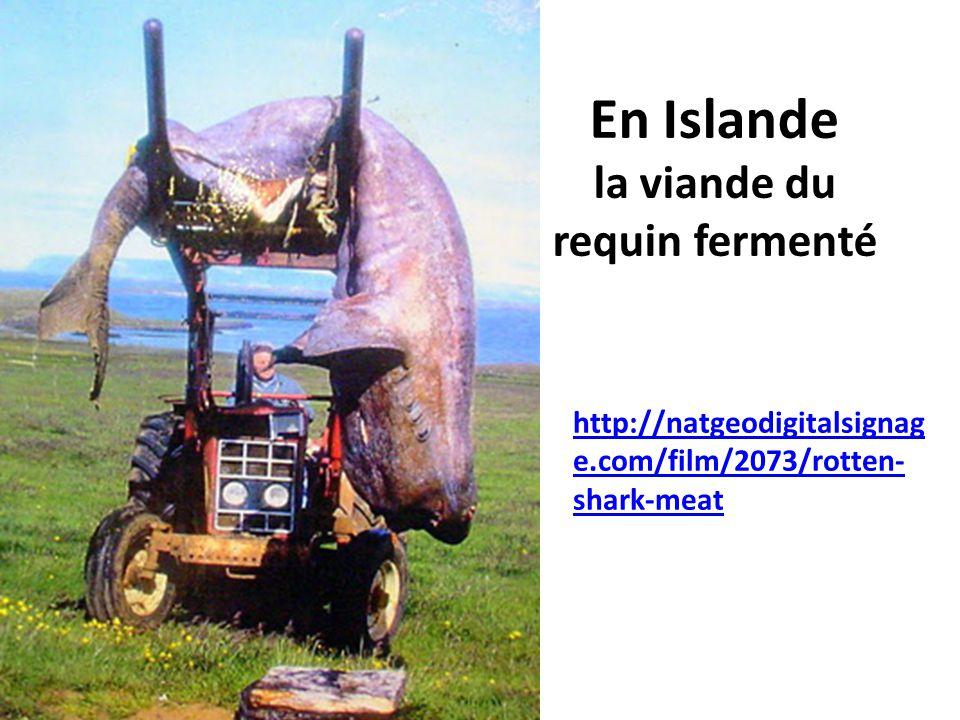En Islande la viande du requin fermenté http://natgeodigitalsignag e.com/film/2073/rotten- shark-meat
