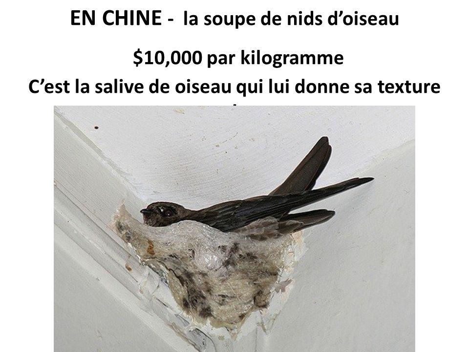 EN CHINE - la soupe de nids doiseau $10,000 par kilogramme Cest la salive de oiseau qui lui donne sa texture !