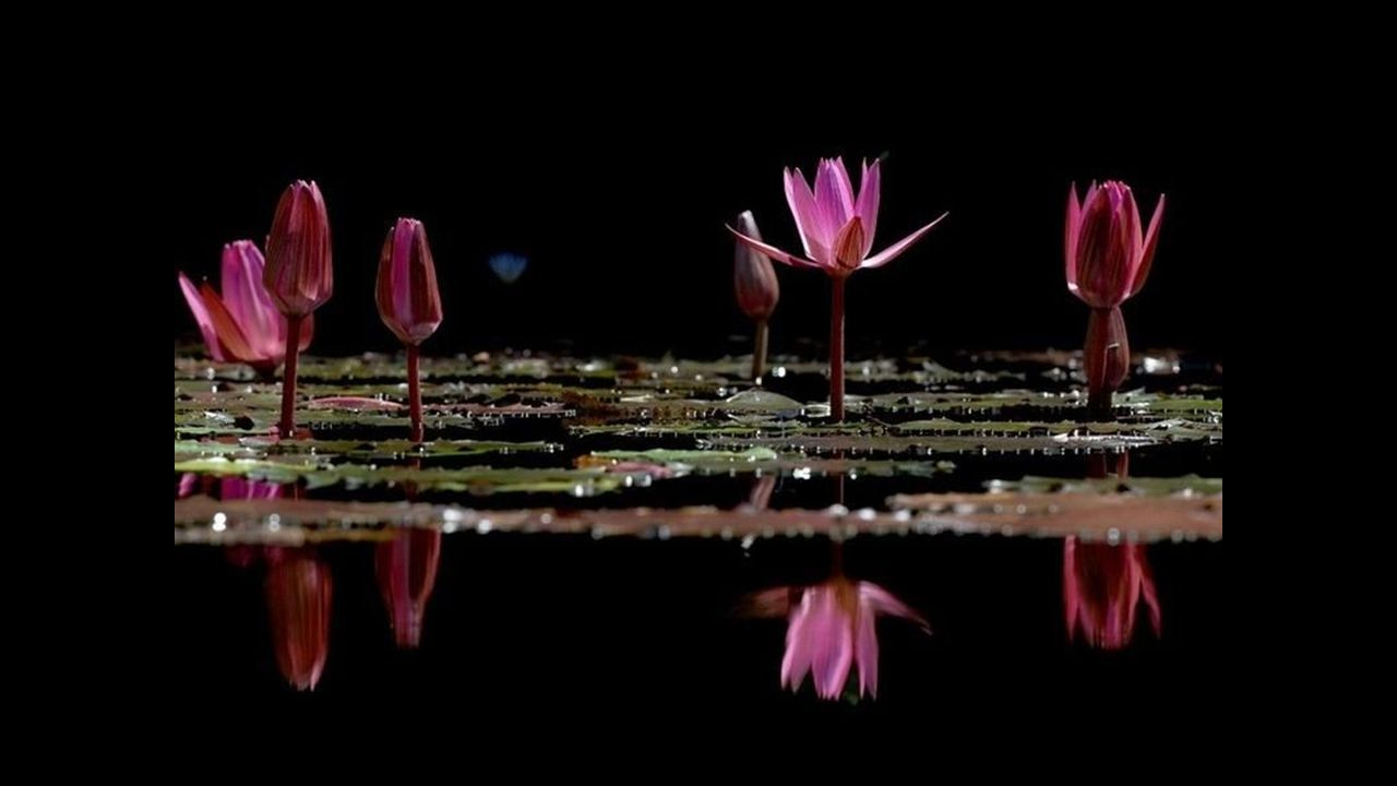 Comme une lavande en Provence Embaume jusquà linfini La poésie est dans ma vie Un parfum, une quintessence