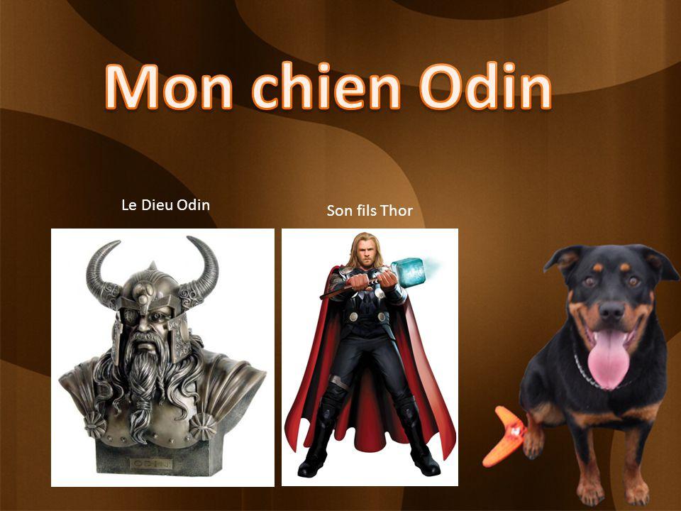 Le Dieu Odin Son fils Thor