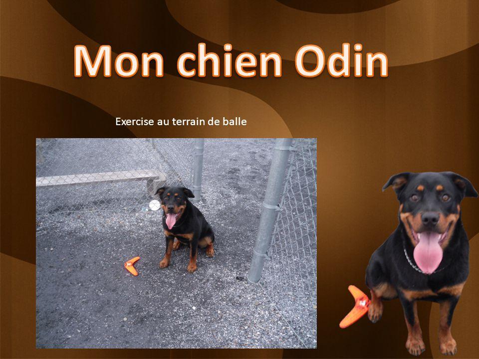 Cétait ma présentation de mon chien Odin, je vous invite maintenant à regarder son album de photos.