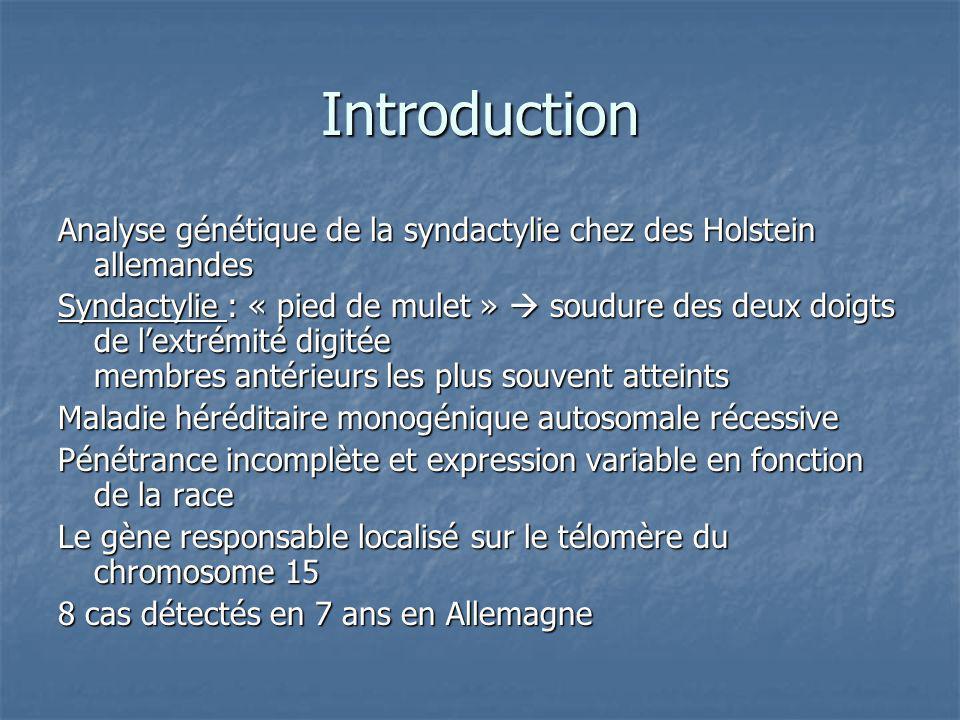 Introduction Analyse génétique de la syndactylie chez des Holstein allemandes Syndactylie : « pied de mulet » soudure des deux doigts de lextrémité di
