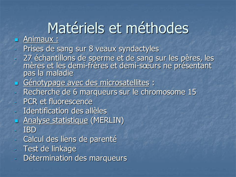 Matériels et méthodes Animaux : Animaux : - Prises de sang sur 8 veaux syndactyles - 27 échantillons de sperme et de sang sur les pères, les mères et