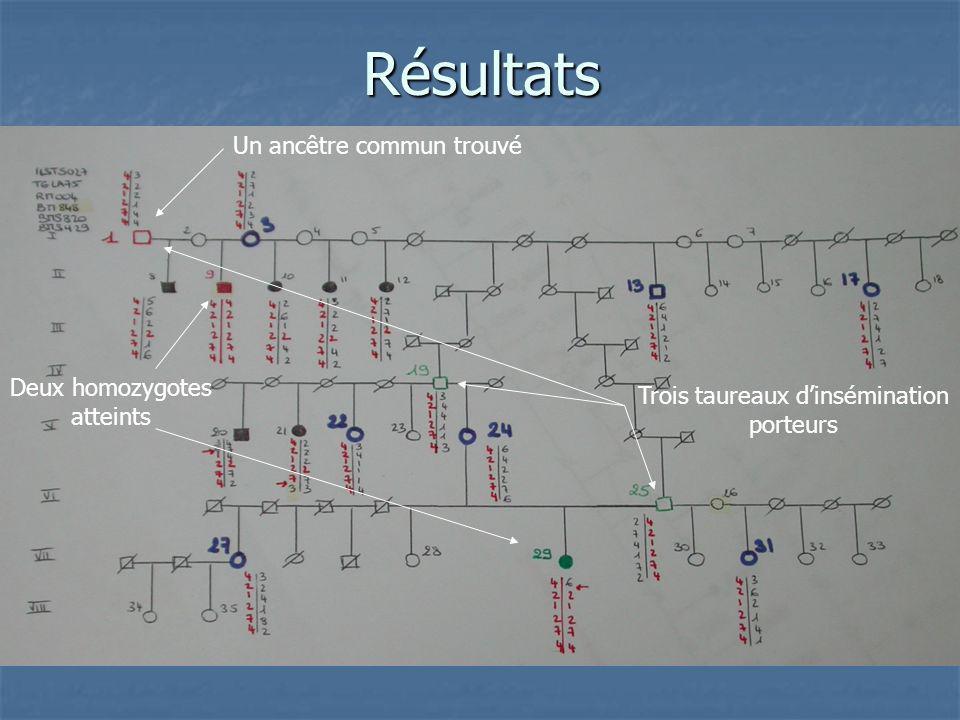 1 ancêtre commun trouvé (1) 1 ancêtre commun trouvé (1) 3 taureaux dinsémination porteurs (1-19-25) 3 taureaux dinsémination porteurs (1-19-25) 1 veau consanguin (29) 1 veau consanguin (29) 2 homozygotes malades : (9) et (29) 2 homozygotes malades : (9) et (29) Nombreux porteurs sains Nombreux porteurs sains Parallélisme entre génotype et descendance confirmé Parallélisme entre génotype et descendance confirmé Les animaux atteints sont homozygotes au niveau du marqueur BM848 (allèle 2) Les animaux atteints sont homozygotes au niveau du marqueur BM848 (allèle 2) Haplotype rencontré chez les animaux malades et porteurs : 4-2-1-2-7-4 Haplotype rencontré chez les animaux malades et porteurs : 4-2-1-2-7-4 Les individus (20) et (21) ont subi une recombinaison haplotype : 1-2-7 Les individus (20) et (21) ont subi une recombinaison haplotype : 1-2-7