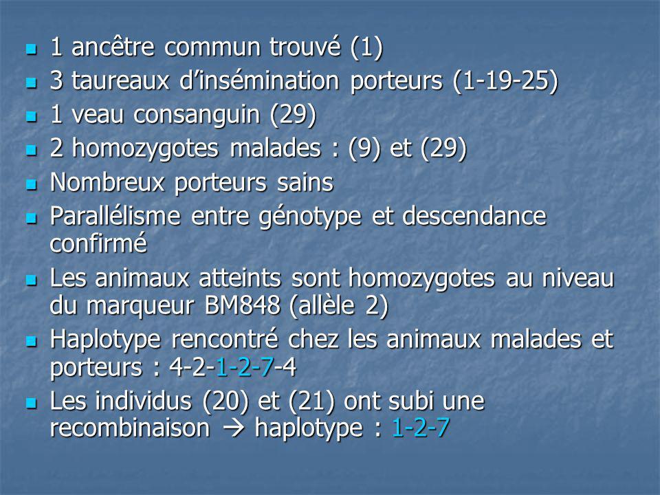 Conclusions de létude Gène de la syndactylie non trouvé mais bien localisé sur le télomère du chromosome 15, au niveau des marqueurs : RM004, BM848, BMS820 Gène de la syndactylie non trouvé mais bien localisé sur le télomère du chromosome 15, au niveau des marqueurs : RM004, BM848, BMS820 animaux avec haplotype 1-2-7 considérés comme porteurs sains à haut risque animaux avec haplotype 1-2-7 considérés comme porteurs sains à haut risque Maladie persistante car : Maladie persistante car : - Taureaux reproducteurs testés mais pas toutes les mères - Une ou plusieurs mutations peut provoquer la maladie sans présence de lhaplotype 1-2-7 Problème : pour détecter le gène de la syndactylie, connaître génotype du père, de la mère, et de lindividu.