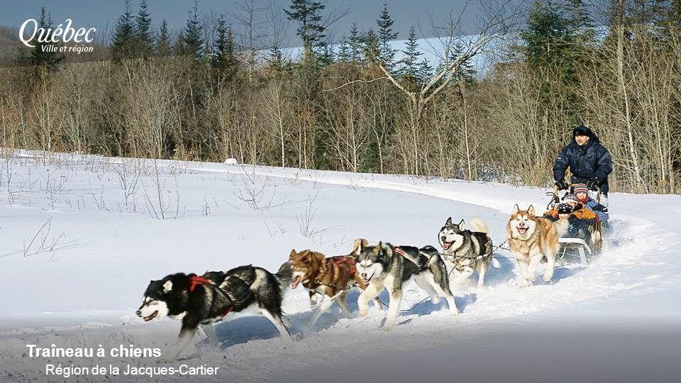 Traîneau à chiens Région de la Jacques-Cartier