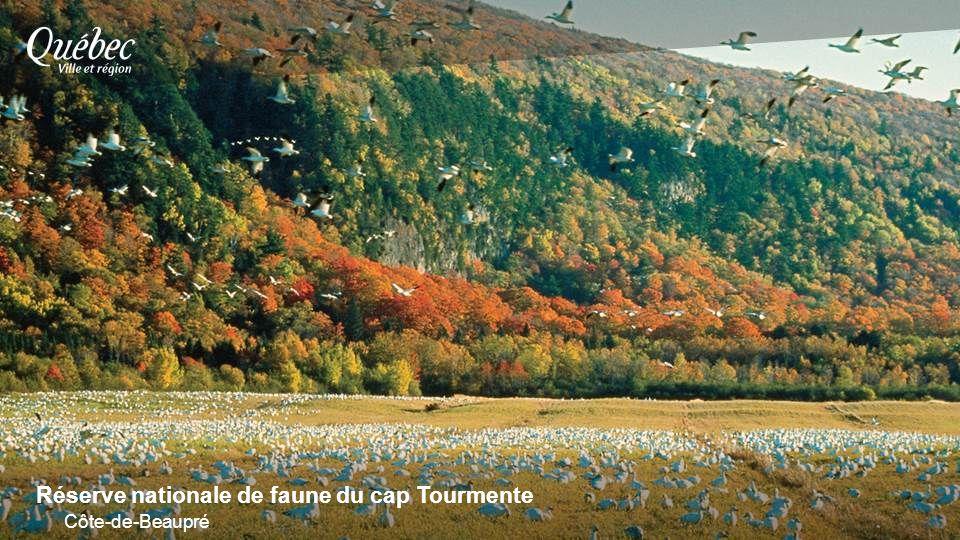 Réserve nationale de faune du cap Tourmente Côte-de-Beaupré