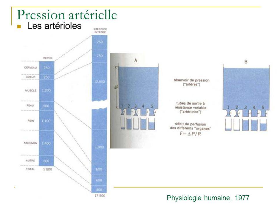 Pression artérielle Les artérioles Physiologie humaine, 1977