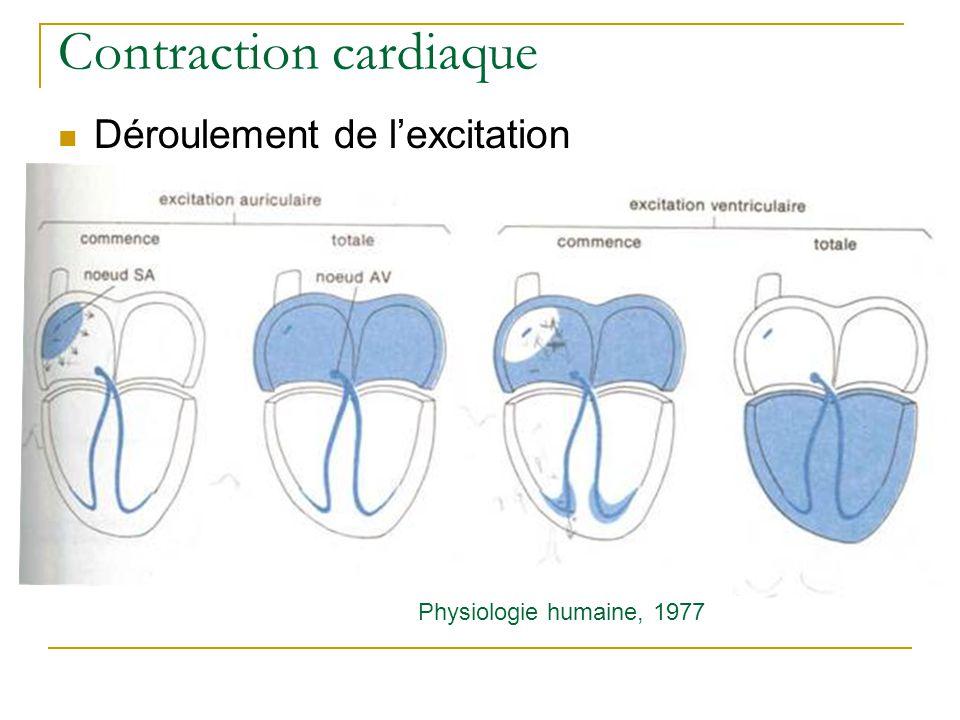 Traitement minimalement invasif par voie endovasculaire Traitement chirurgical Pontage coronarien ou Bypass : contournement de la zone sténosée par autogreffe (veine saphène…).