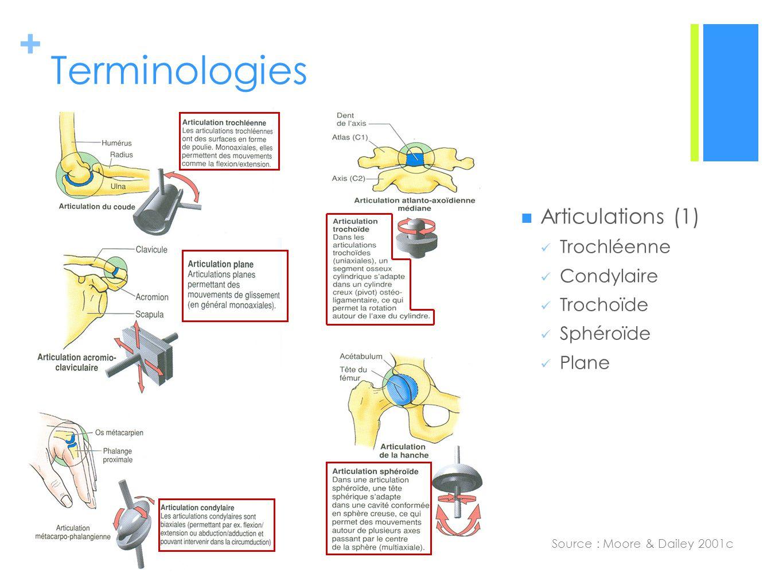 + Terminologies Source : Moore & Dailey 2001c Articulations (1) Trochléenne Condylaire Trochoïde Sphéroïde Plane