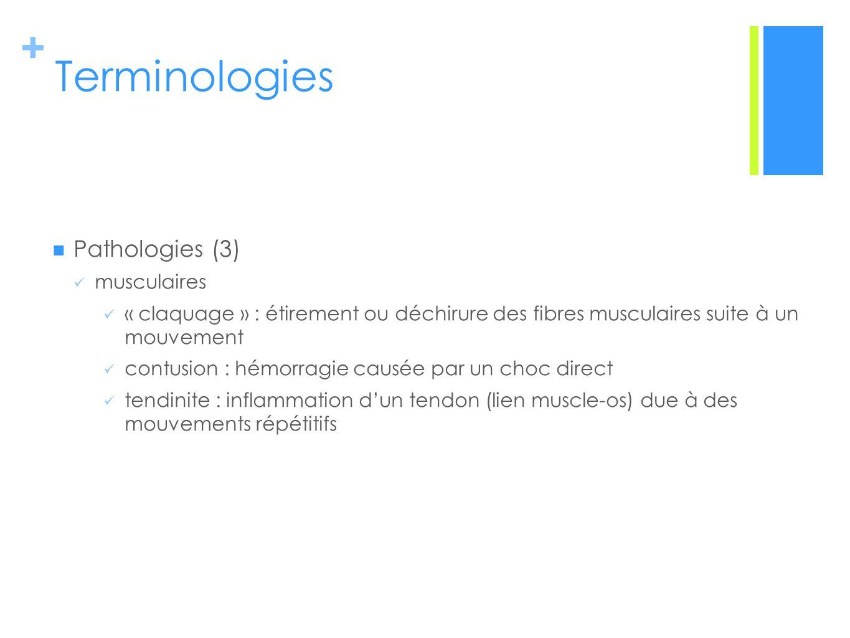 + Terminologies Pathologies (3) musculaires « claquage » : étirement ou déchirure des fibres musculaires suite à un mouvement contusion : hémorragie causée par un choc direct tendinite : inflammation dun tendon (lien muscle-os) due à des mouvements répétitifs