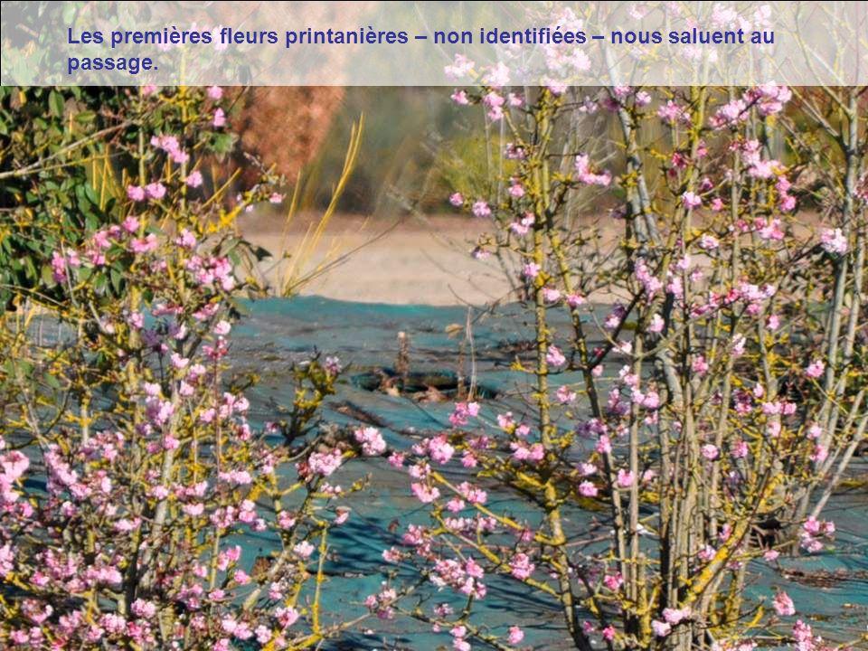 Doué la Fontaine est une ville riche en vestiges anciens et en belles demeu- res à colombages.