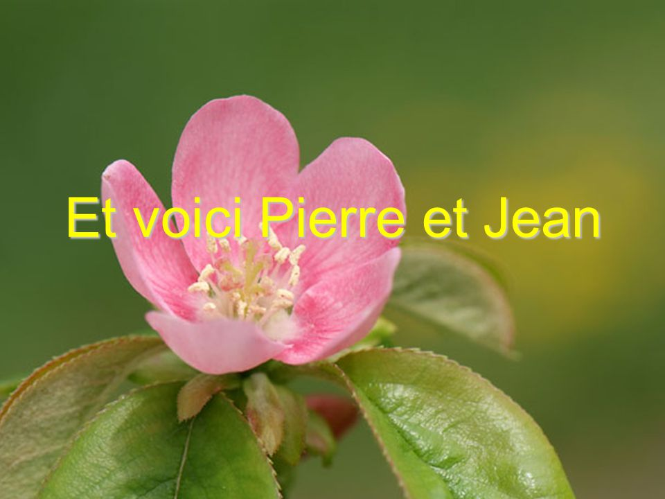 Et voici Pierre et Jean