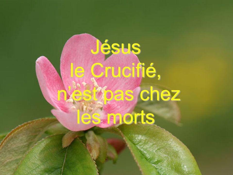 Jésus le Crucifié, nest pas chez les morts
