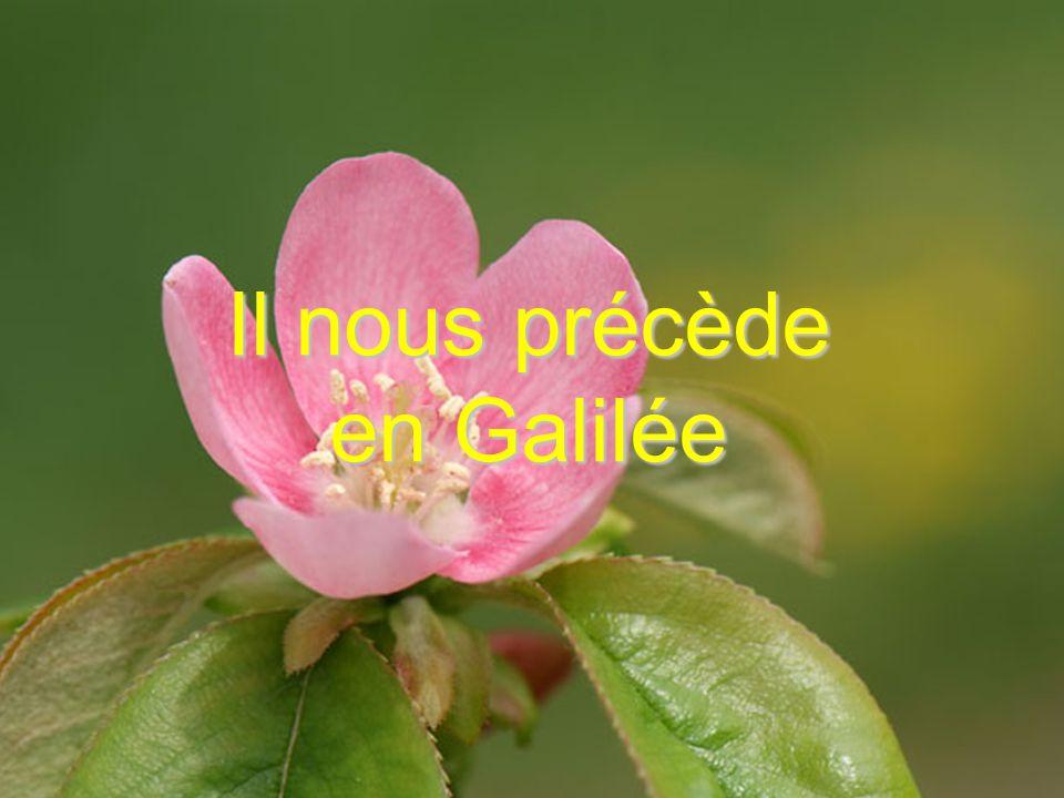 Il nous précède en Galilée