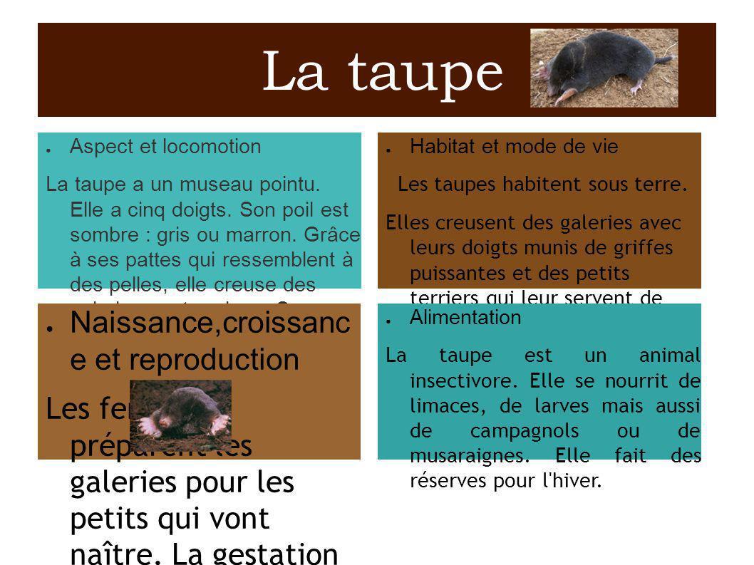La chauve-souris Aspect et locomotion La chauve-souris est le seul mammifère volant.