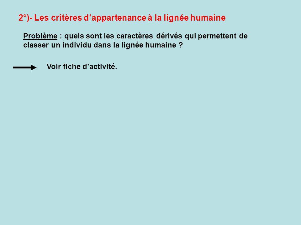2°)- Les critères dappartenance à la lignée humaine Problème : quels sont les caractères dérivés qui permettent de classer un individu dans la lignée