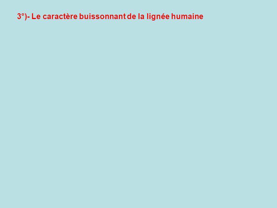 3°)- Le caractère buissonnant de la lignée humaine