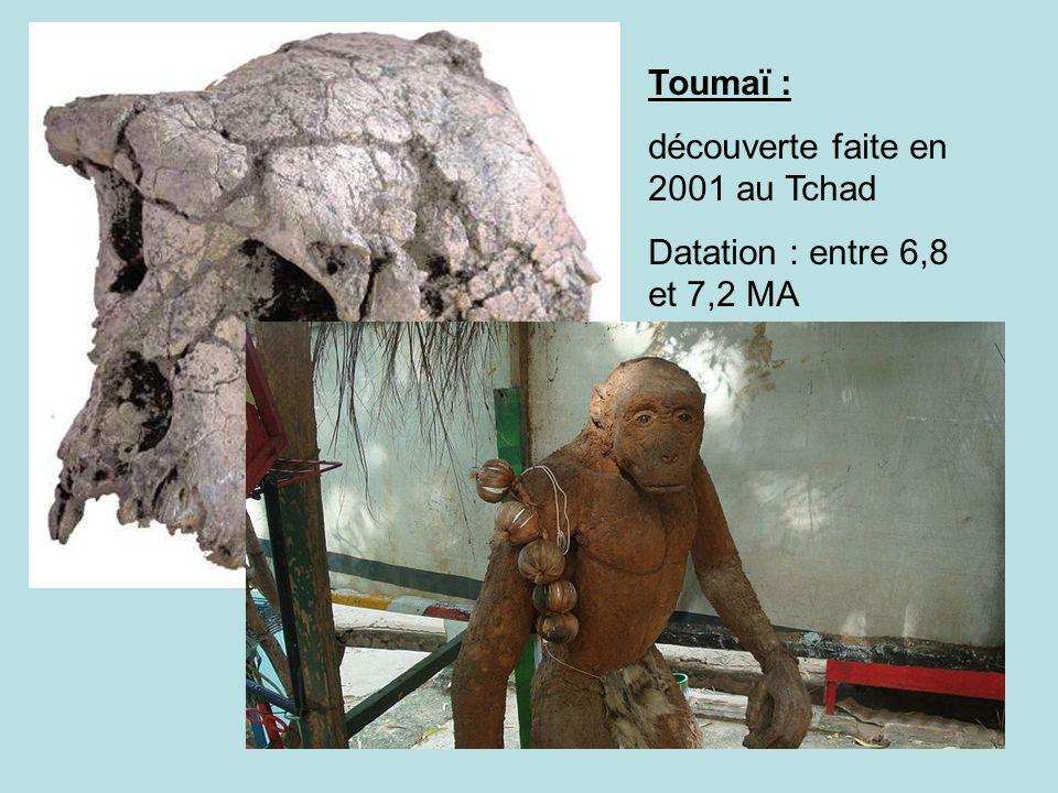 Toumaï : découverte faite en 2001 au Tchad Datation : entre 6,8 et 7,2 MA