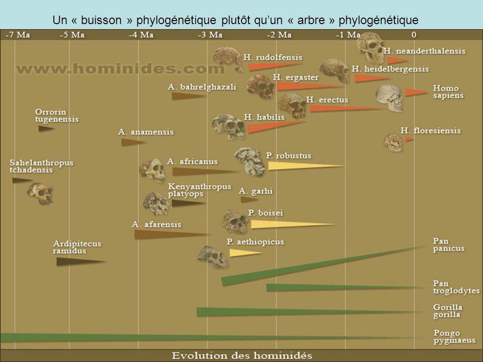 Un « buisson » phylogénétique plutôt quun « arbre » phylogénétique