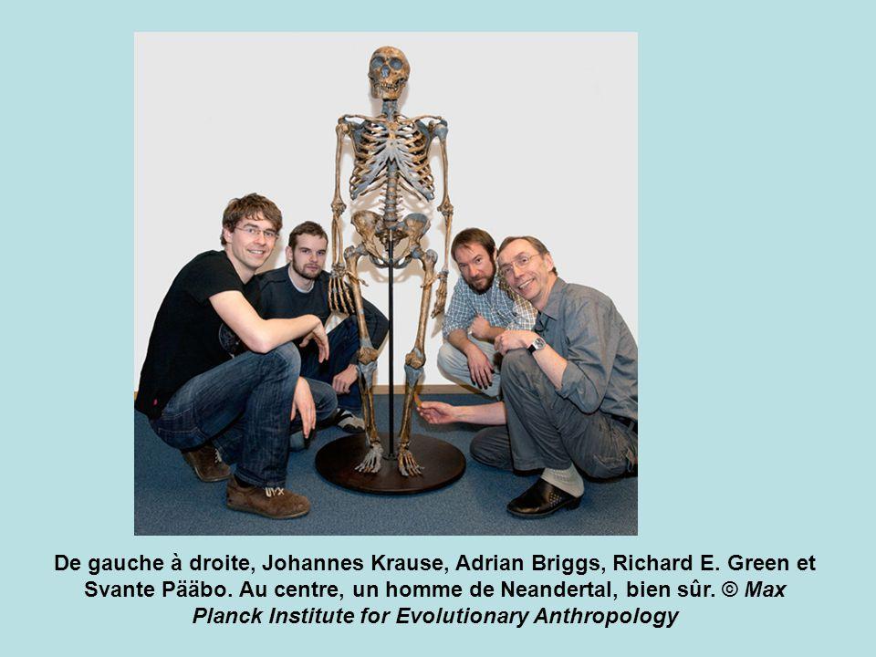De gauche à droite, Johannes Krause, Adrian Briggs, Richard E. Green et Svante Pääbo. Au centre, un homme de Neandertal, bien sûr. © Max Planck Instit