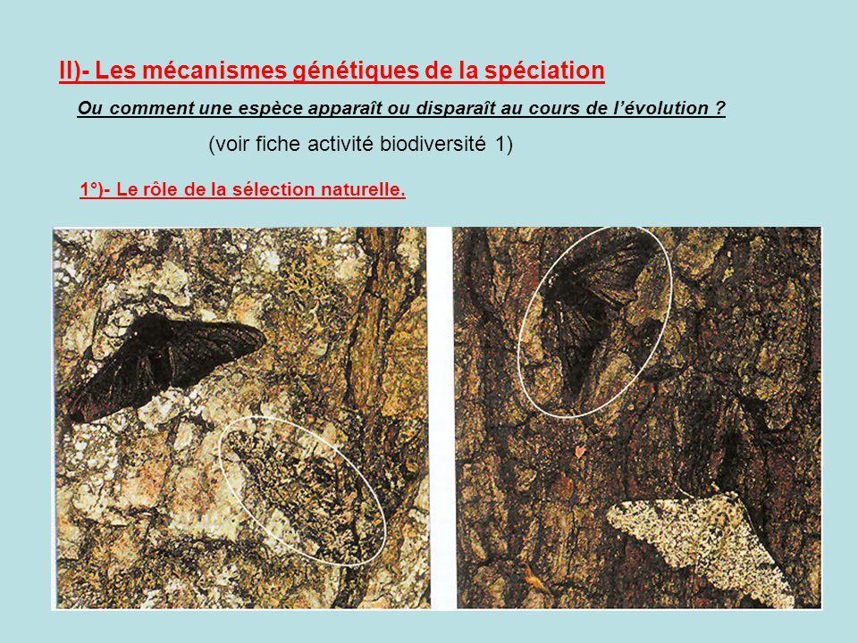 II)- Les mécanismes génétiques de la spéciation Ou comment une espèce apparaît ou disparaît au cours de lévolution ? (voir fiche activité biodiversité