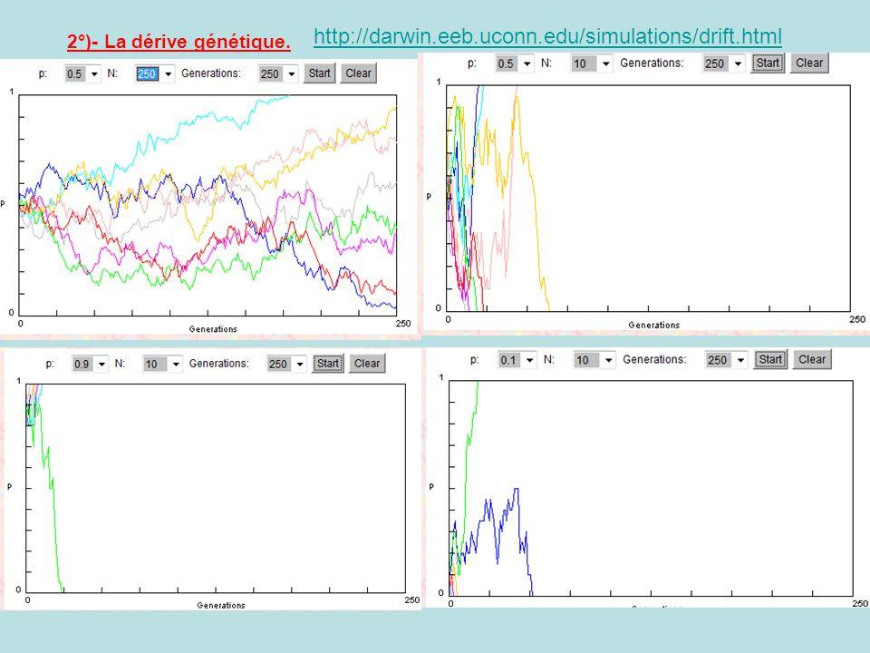 2°)- La dérive génétique. http://darwin.eeb.uconn.edu/simulations/drift.html