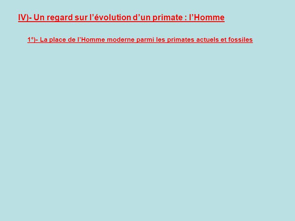 IV)- Un regard sur lévolution dun primate : lHomme 1°)- La place de lHomme moderne parmi les primates actuels et fossiles