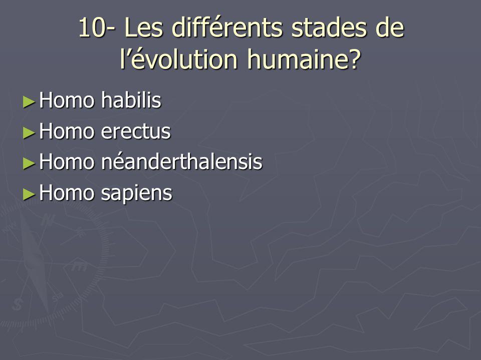 10- Les différents stades de lévolution humaine.