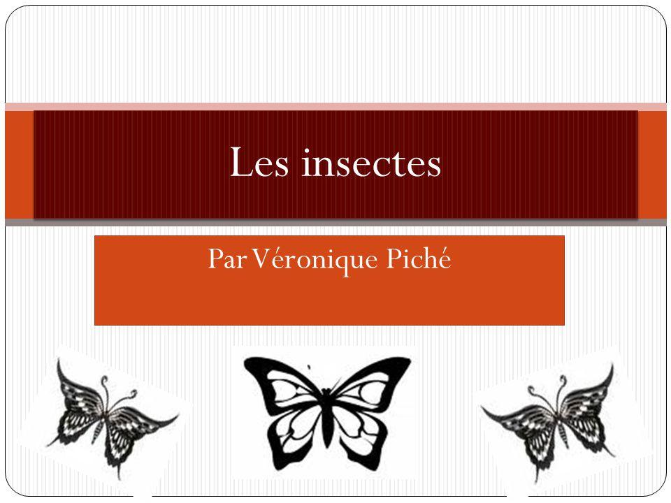 Le papillon amiral Son nom scientifique est(Limenitis arthemis arthemis Drury) et il y a trois espèces de Limenitis arthemis.