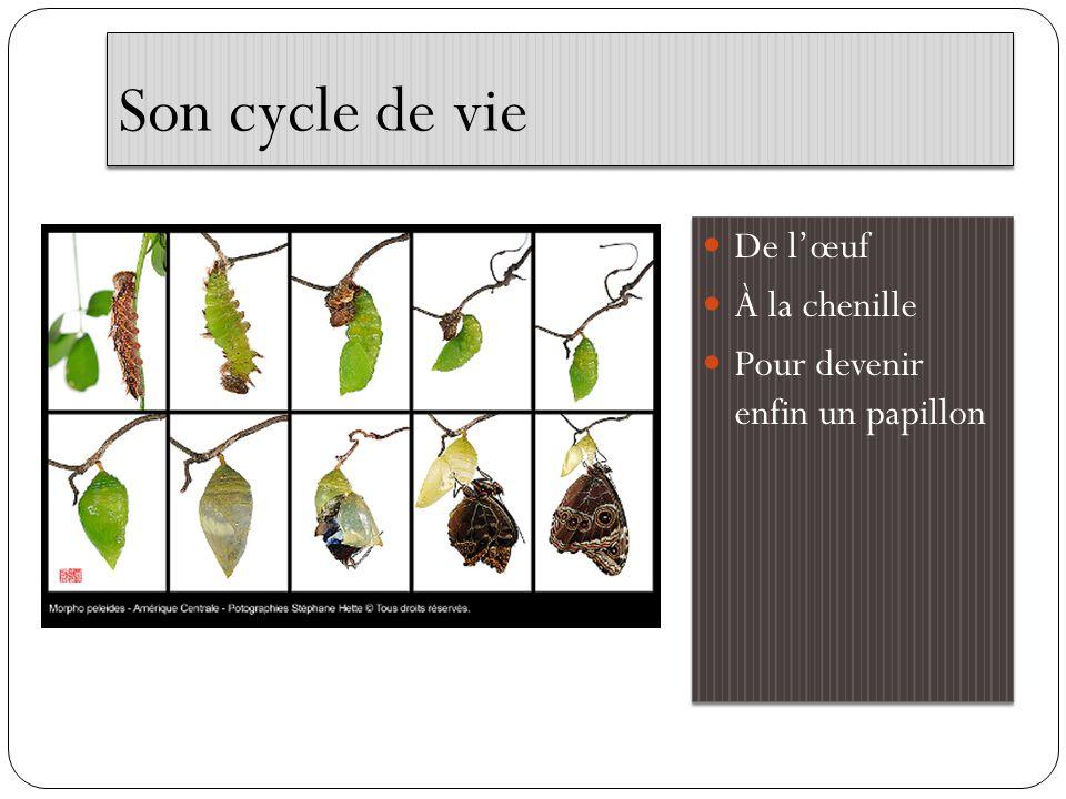 Le papillon Monarque Les ailes du Monarque mesure environ de 93 à 105 mm.