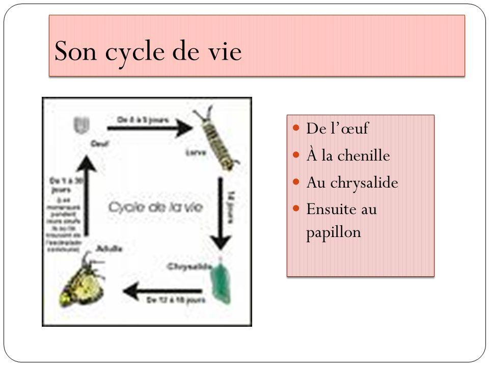 Le cycle de vie des insectes Le cycle de vie des insectes comporte trois types de métamorphose.