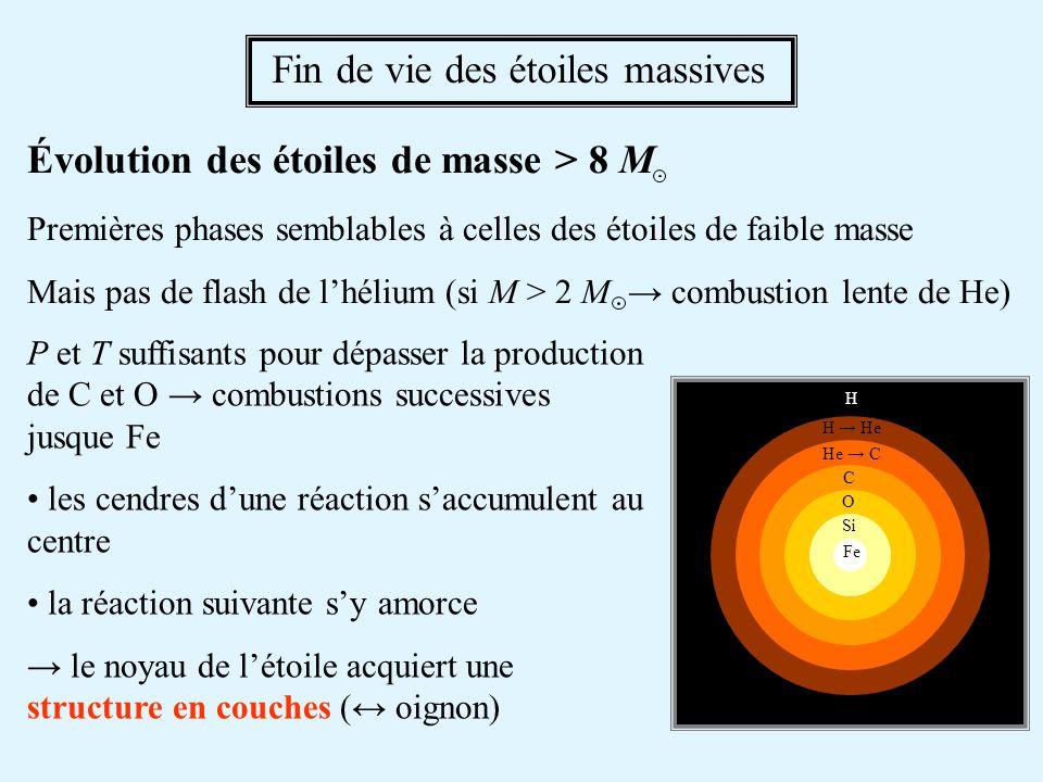 Fin de vie des étoiles massives Évolution des étoiles de masse > 8 M Premières phases semblables à celles des étoiles de faible masse Mais pas de flas
