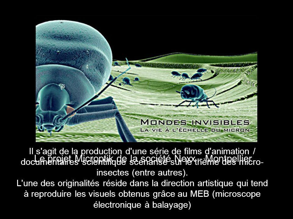 Il s agit de la production d une série de films d animation / documentaires scientifique scénarisé sur le thème des micro- insectes (entre autres).