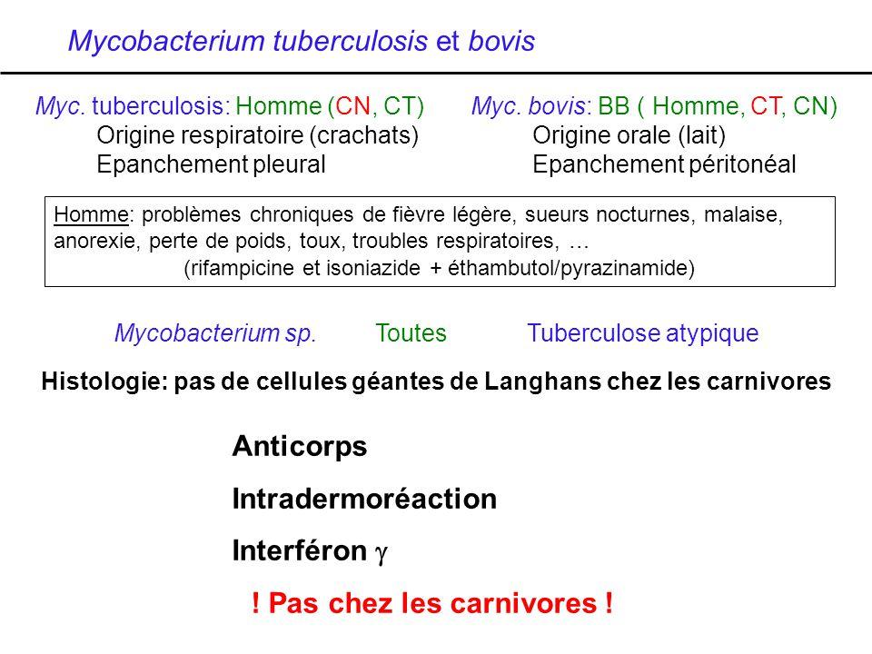 Mycobacterium tuberculosis et bovis Myc. tuberculosis: Homme (CN, CT)Myc. bovis: BB ( Homme, CT, CN) Origine respiratoire (crachats)Origine orale (lai