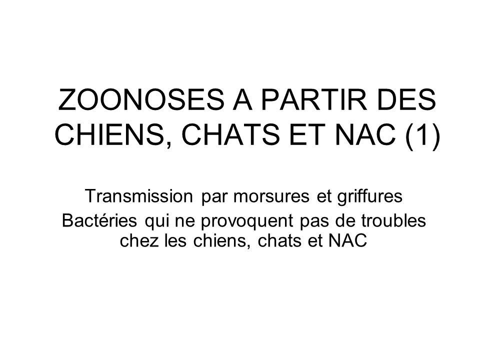 ZOONOSES A PARTIR DES CHIENS, CHATS ET NAC (1) Transmission par morsures et griffures Bactéries qui ne provoquent pas de troubles chez les chiens, cha