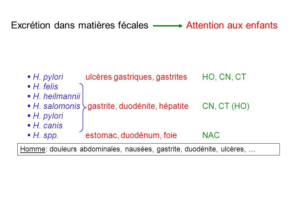 H. pyloriulcères gastriques, gastritesHO, CN, CT H. felis H. heilmannii H. salomonis gastrite, duodénite, hépatiteCN, CT (HO) H. pylori H. canis H. sp