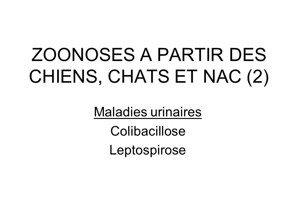 ZOONOSES A PARTIR DES CHIENS, CHATS ET NAC (2) Maladies urinaires Colibacillose Leptospirose