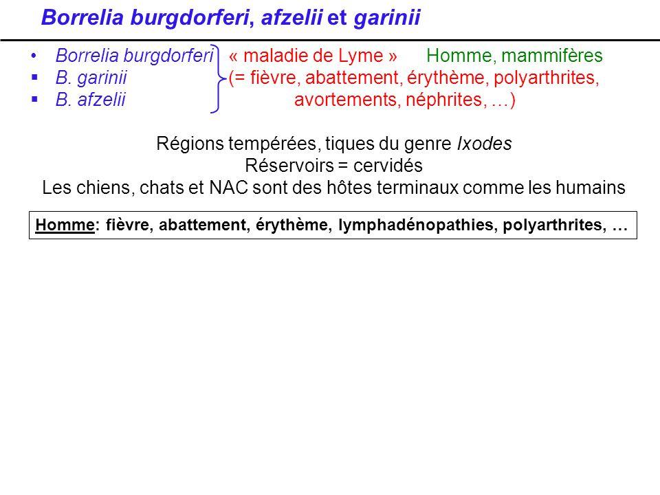 Borrelia burgdorferi, afzelii et garinii Borrelia burgdorferi« maladie de Lyme » Homme, mammifères B. garinii(= fièvre, abattement, érythème, polyarth